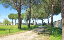 Giardino - Viale d'ingresso