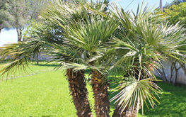 Giardino - Particolare pianta